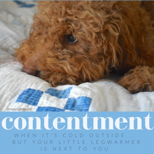 Red goldendoodle dog on vintage quilt with quote about contentment on blue background
