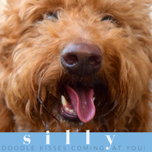 Photo close-up red golden doodle face with tongue out and  feel-good word