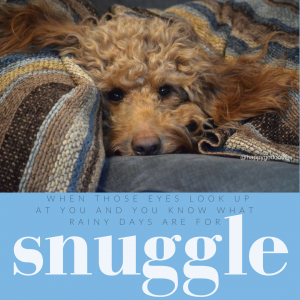 Photo red goldendoodle face snuggled on couch and feel-good word snuggle