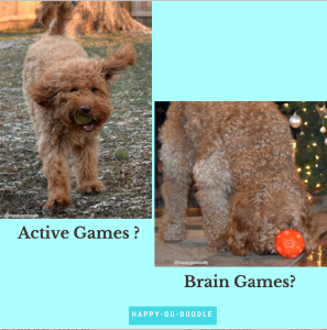 Red goldendoodle dog fetching a tennis ball and doodle eating treats from a red ball