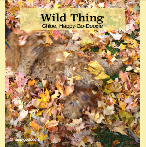 Red goldendoodle dog in a swirl of fall leaves with title wild thing