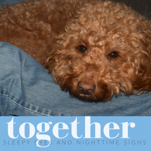 """Photo Red goldendoodle dog with feel-good word """"together"""""""