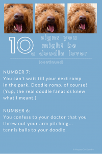 Red goldendoodle dog and two reasons why you might be a doodle dog fanatic with #6 saying you confess to your doctor that you threw out your arm...pitching tennis balls to your doodle dog.