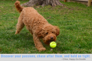 Photo red goldendoodle dog fetching a yellow tennis ball with inspirational pet blog quote