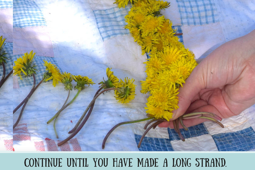 Garland of dandelions that have been braided