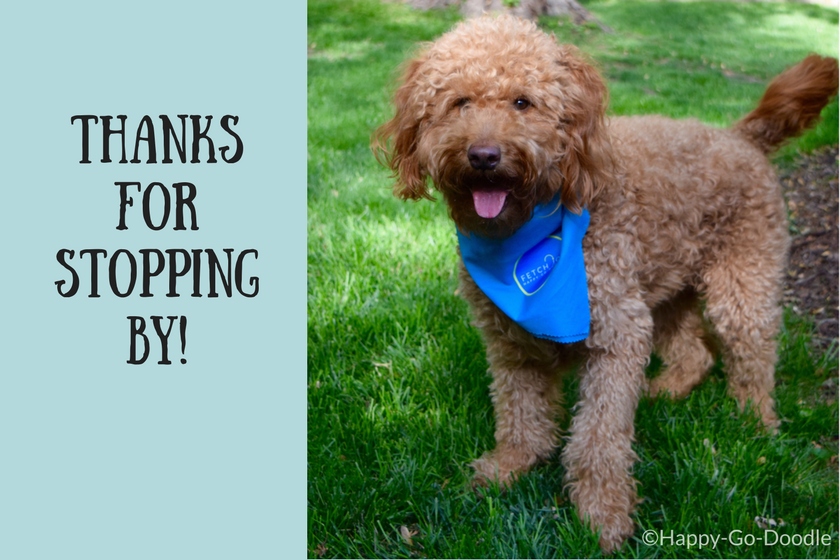 Red goldendoodle dog with title thanks for stopping by