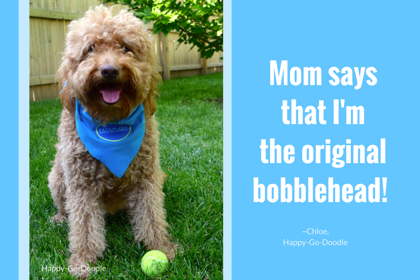 Red goldendoodle dog with type that says mom says I'm the original bobblehead