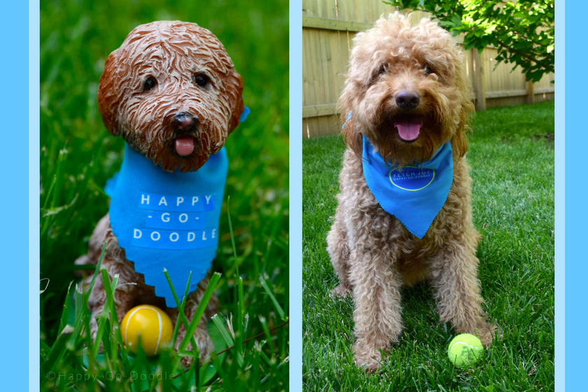 Red goldendoodle dog sitting next to a matching goldendoodle bobblehead