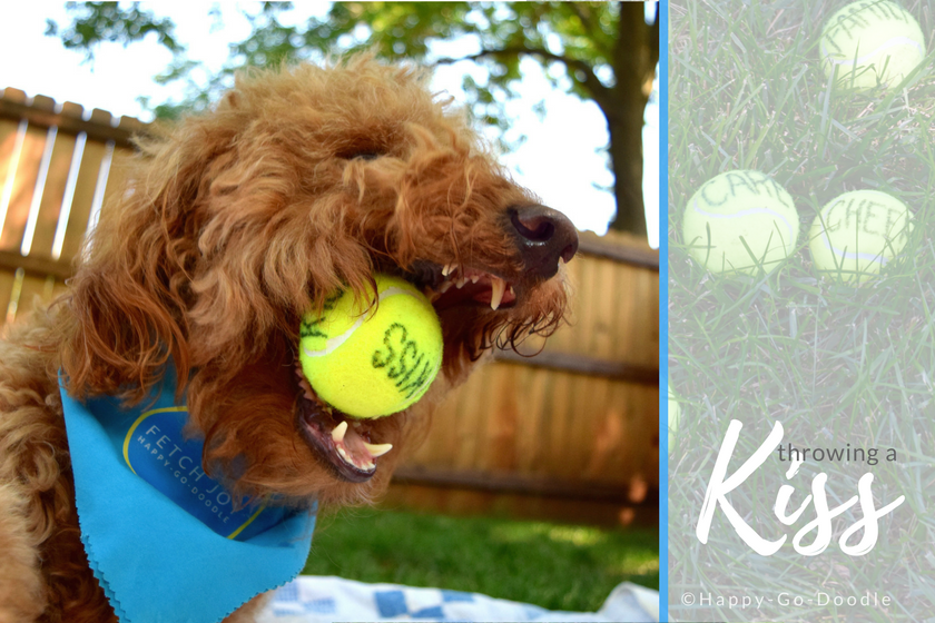 Happy-Go-Doodle Chloe catches a yellow tennis ball with word kiss printed on it