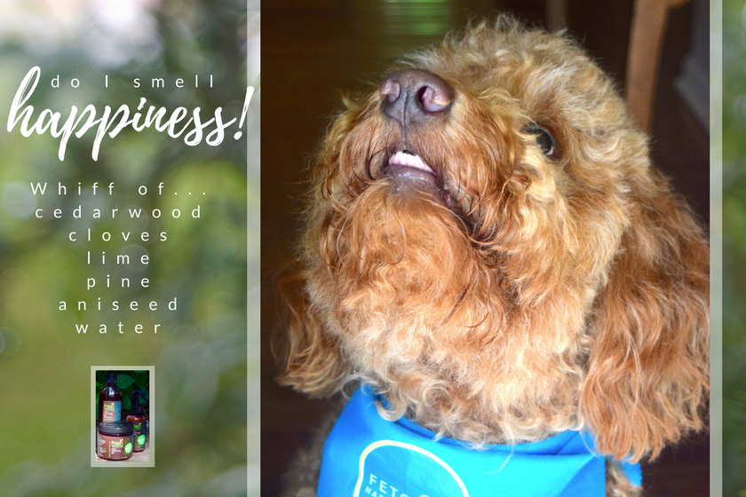 Happy-Go-Doodle Chloe with nose in air and title do I smell happiness and natural ingredients list of Fresh Wave odor removing products