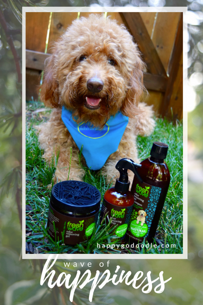 Happy-Go-Doodle Chloe, a red goldendoodle dog, sitting with Fresh Wave odor removing shampoo, spray, and gel on green grass