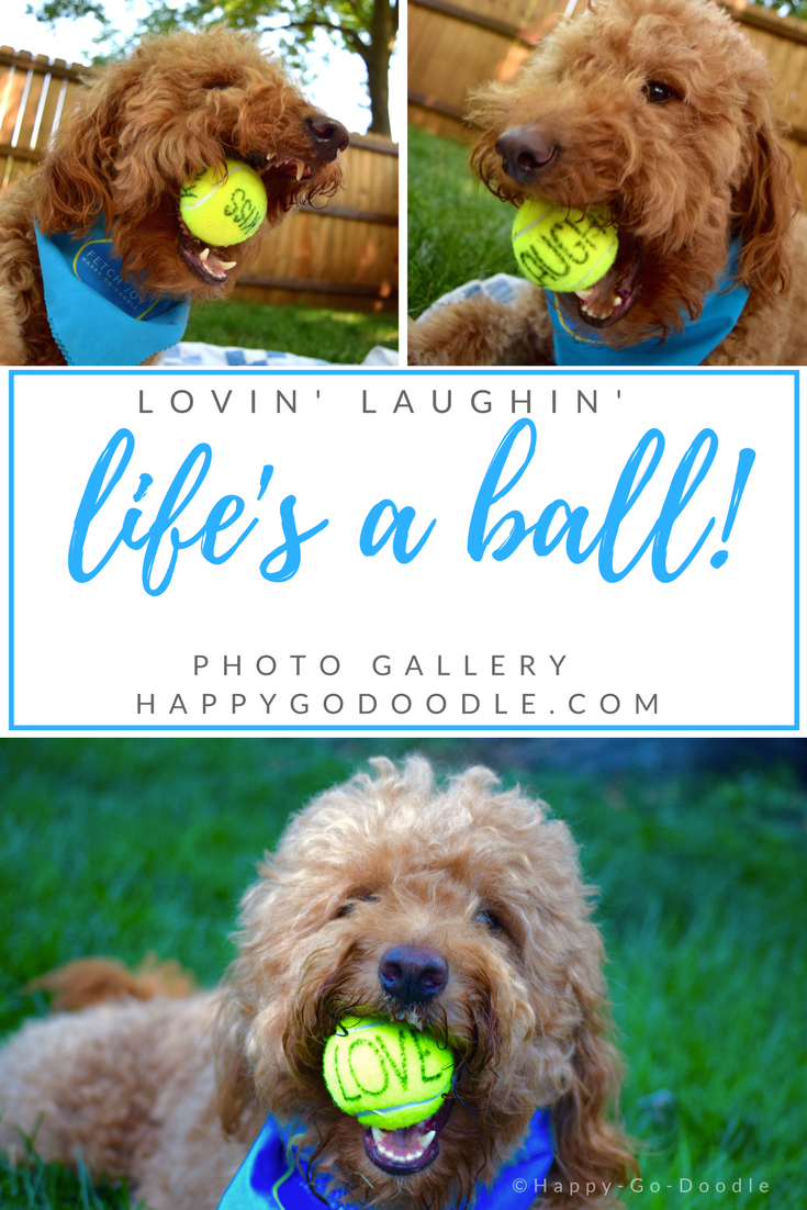 Red goldendoodle dog collage of dog with yellow tennis balls in mouth and title life's a ball dog photo one says laugh dog photo two say love dog photo three says kiss