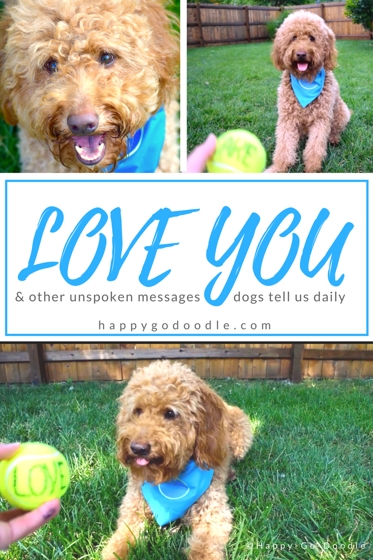 through a game of ball, a dog and her pet parent share uplifting messages with each other