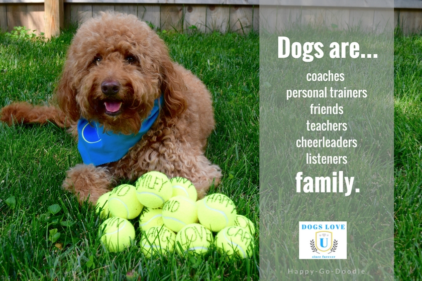 Dogs are more than pets, they are family. Red goldendoodle dog with pile of balls and quote