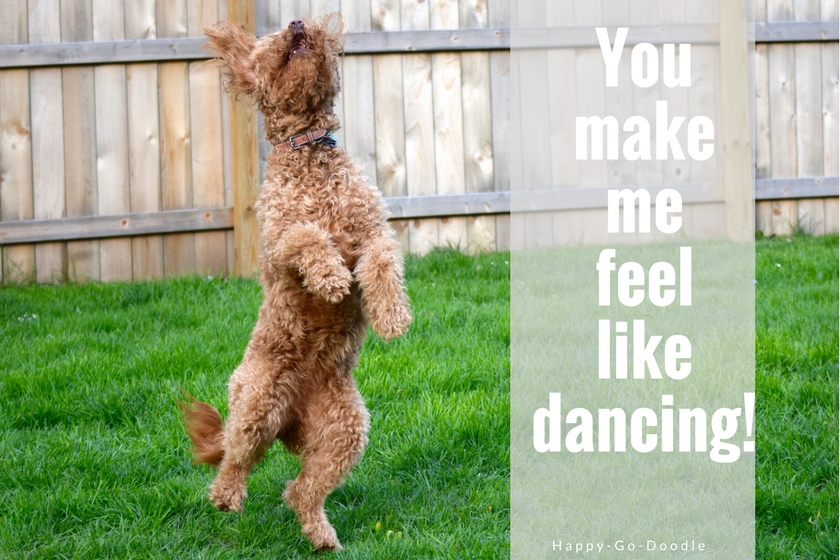 Happy dog dancing with title you make me feel like dancing!