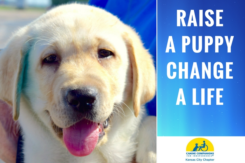 Canine Companions for Independence puppy's face with tongue out and message raise a puppy, change a life and logo of Kansas City Chapter of Canine Companions for Independence on blue background