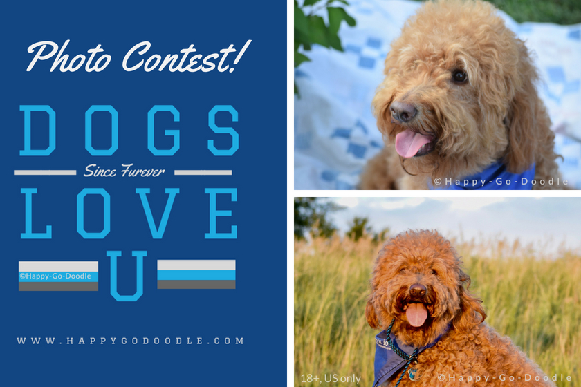 goldendoodle dog photos and title Photo Contest and logo Dogs Love U and website happygodoodle.com