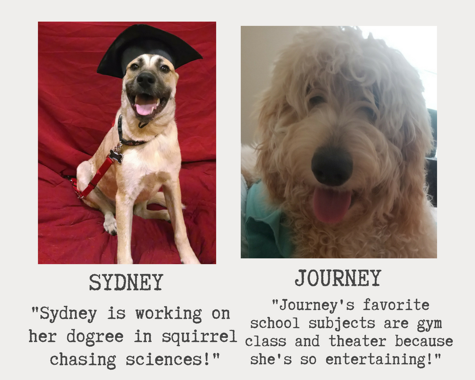 these very cute dogs are named sydney and journey