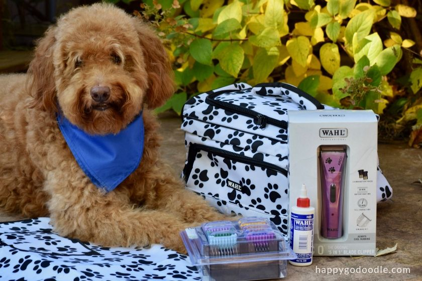 Red goldendoodle dog with Wahl dog grooming products including a trimmer and grooming apron and dog grooming supply kit