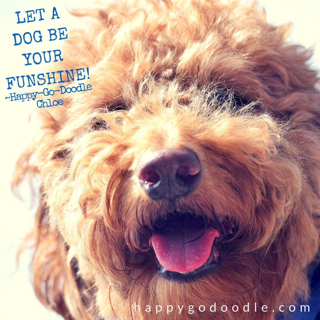 quote about winter and goldendoodle's smiley face