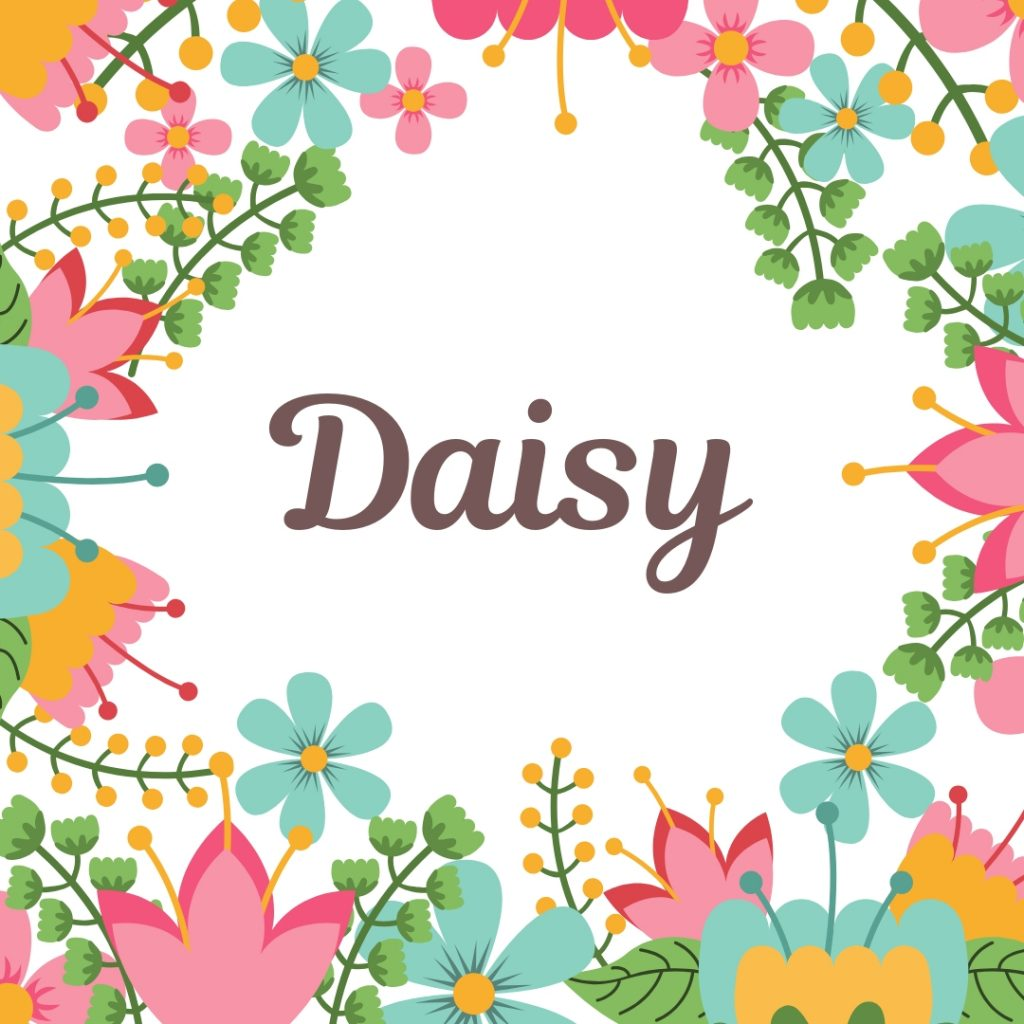 vintage flower border and name daisy in old-fashioned lettering